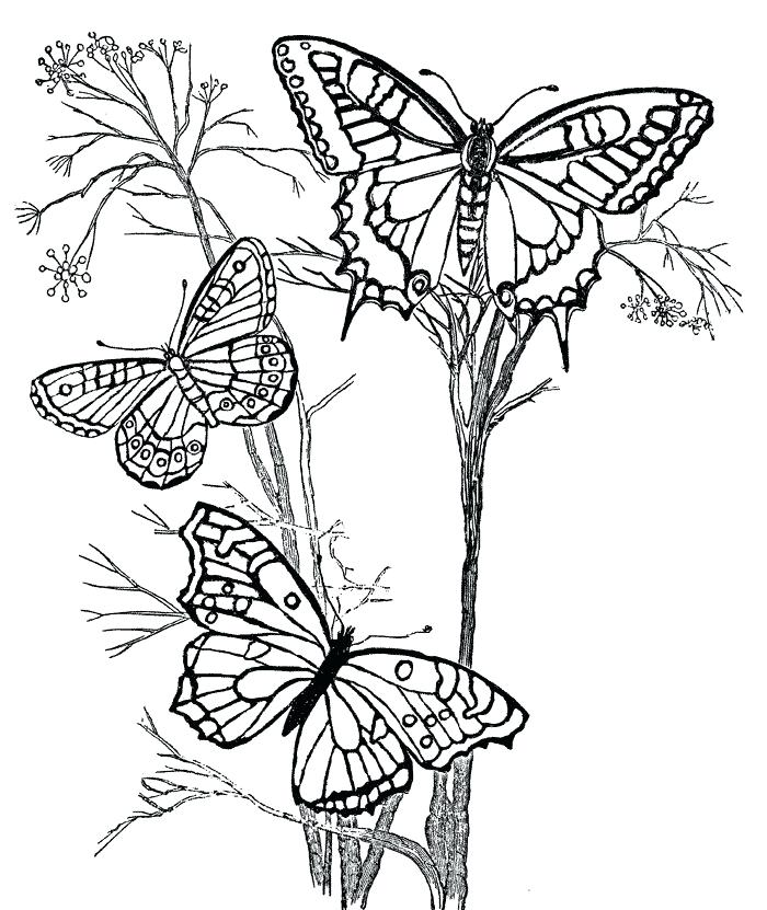 Butterfly In Garden Drawing At GetDrawings.com