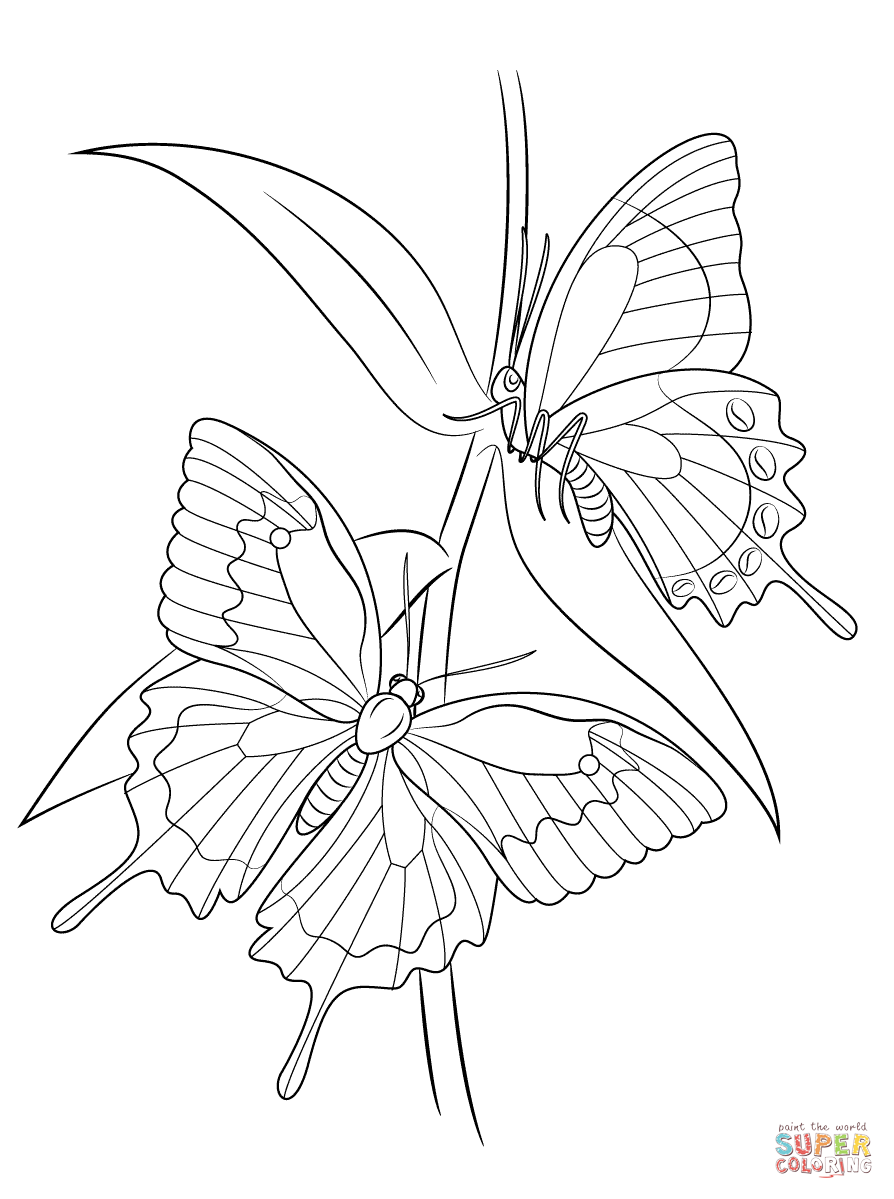 894x1199 Butterfly Garden Coloring Pages Free Printable At Color