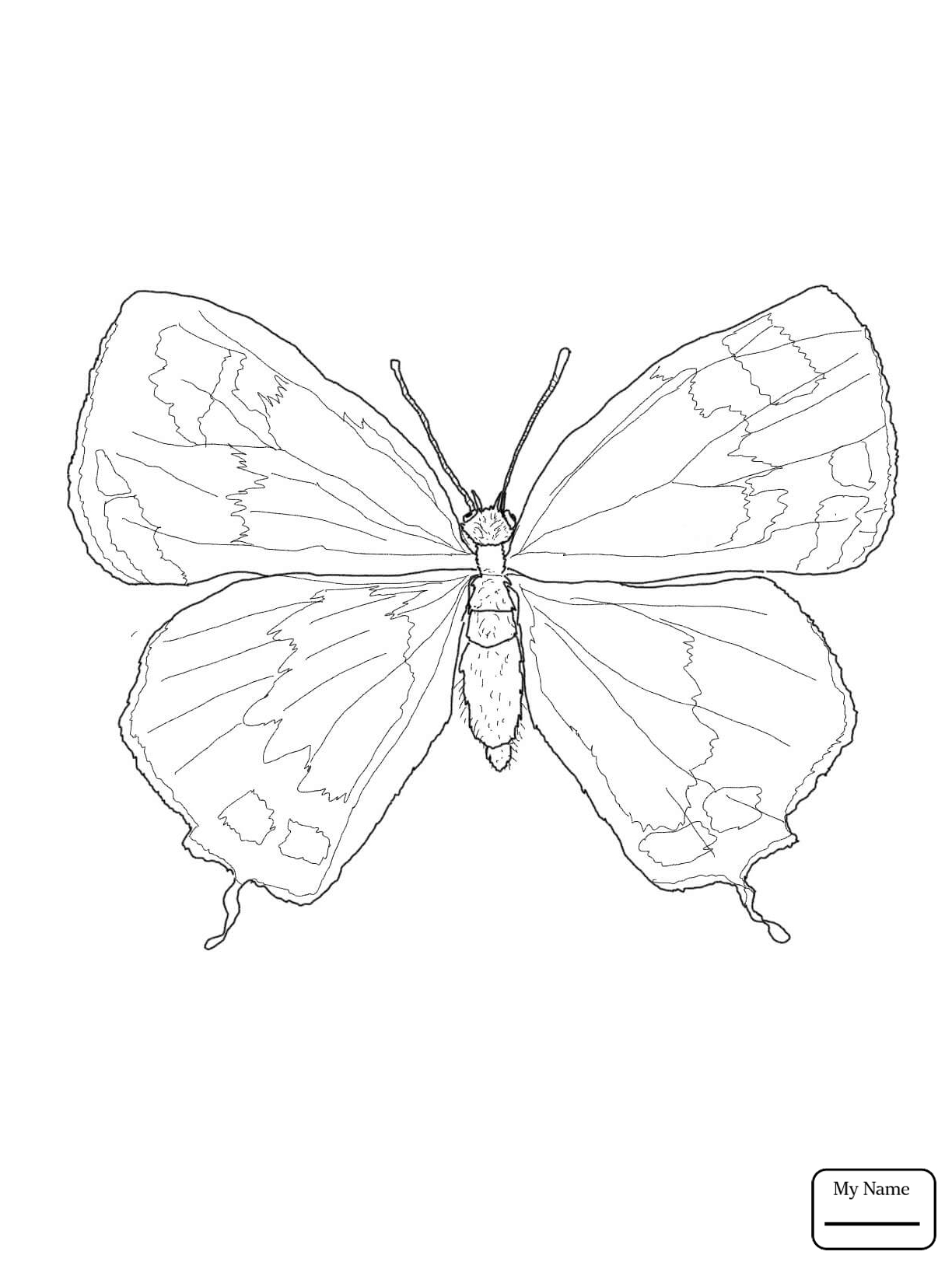 Butterfly In Garden Drawing at GetDrawings.com | Free for personal ...
