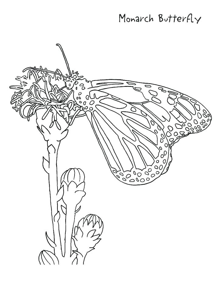 Butterfly Life Cycle Drawing at GetDrawings.com | Free for personal ...