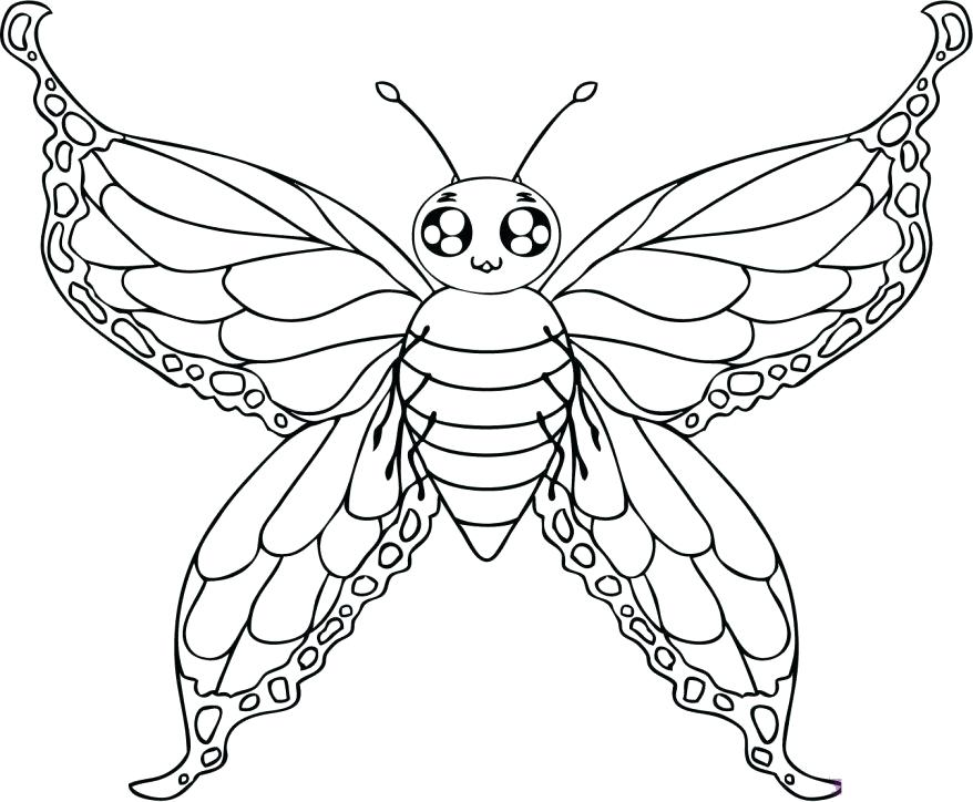 878x724 Monarch Butterfly Life Cycle Coloring Page Monarch Butterfly Life
