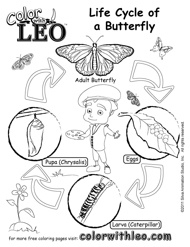 Butterfly Life Cycle Drawing at GetDrawings.com   Free for personal ...