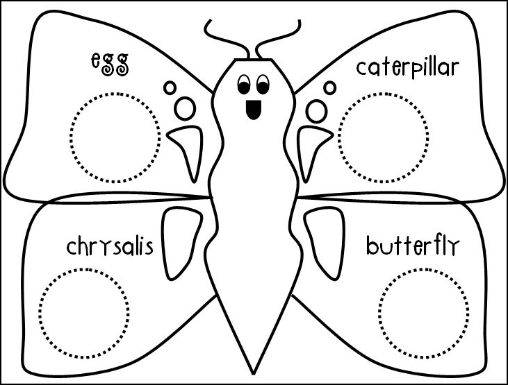 graphic relating to Butterfly Life Cycle Printable Book titled Butterfly Lifetime Cycle Drawing at  Cost-free for