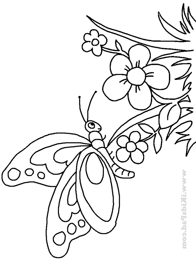 768x1024 Coloured And Complete Drawings Of Butterflies And Flowers