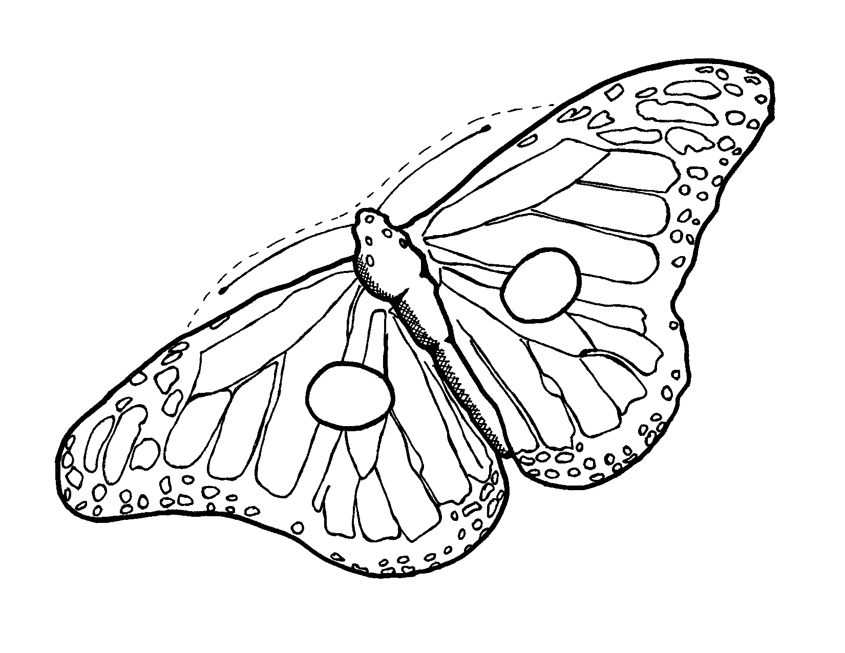 Butterfly line drawing images at getdrawings free for personal 1650x1275 monarch butterfly outline maxwellsz