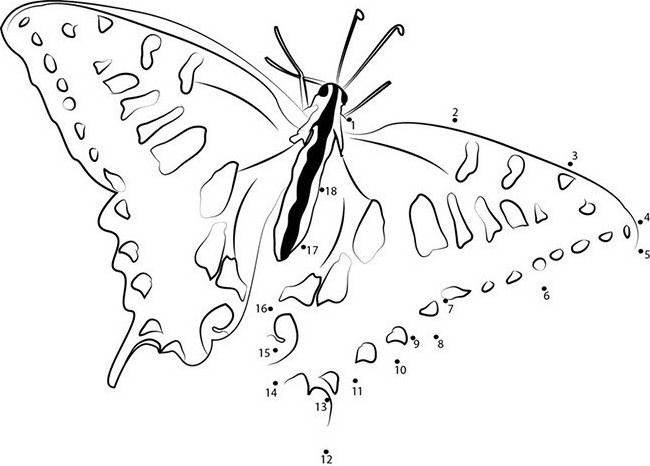 Butterfly Outline Drawing