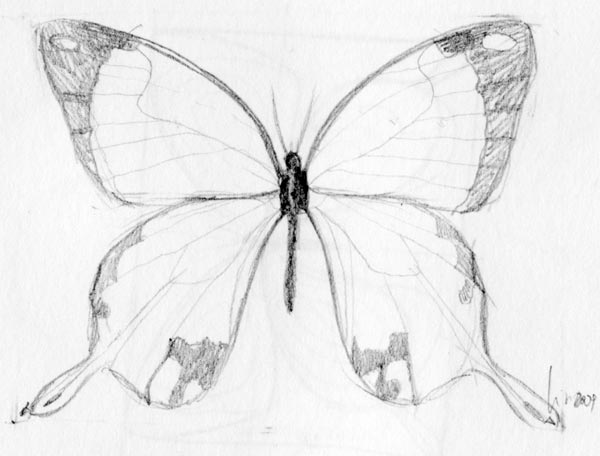 600x456 Butterfly Drawing