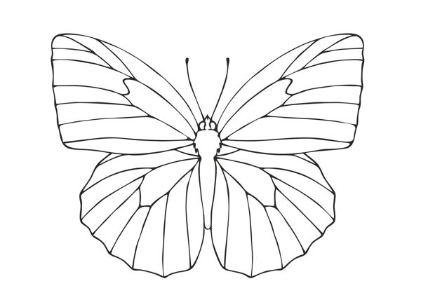 600x438 How To Draw A Butterfly