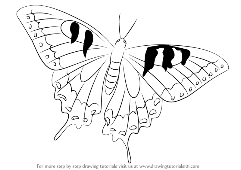 800x566 Learn How To Draw A Swallowtail Butterfly (Butterflies) Step By