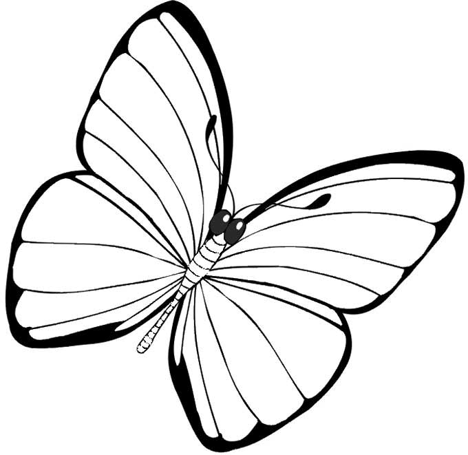 Simple Butterfly Drawing: Butterfly Simple Drawing At GetDrawings