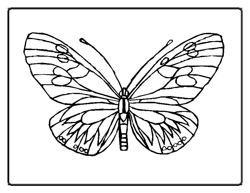 869x671 Butterfly Coloring Pages 11