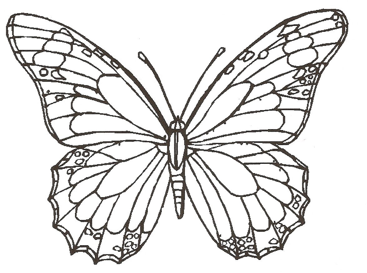 1175x875 Butterfly Wings Drawing How To Draw Butterfly, Rose Flower, Lady
