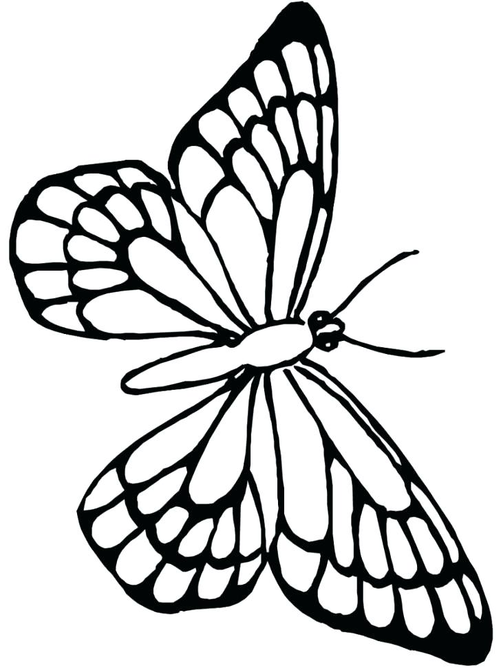 Butterfly Wings Drawing at GetDrawingscom Free for personal use