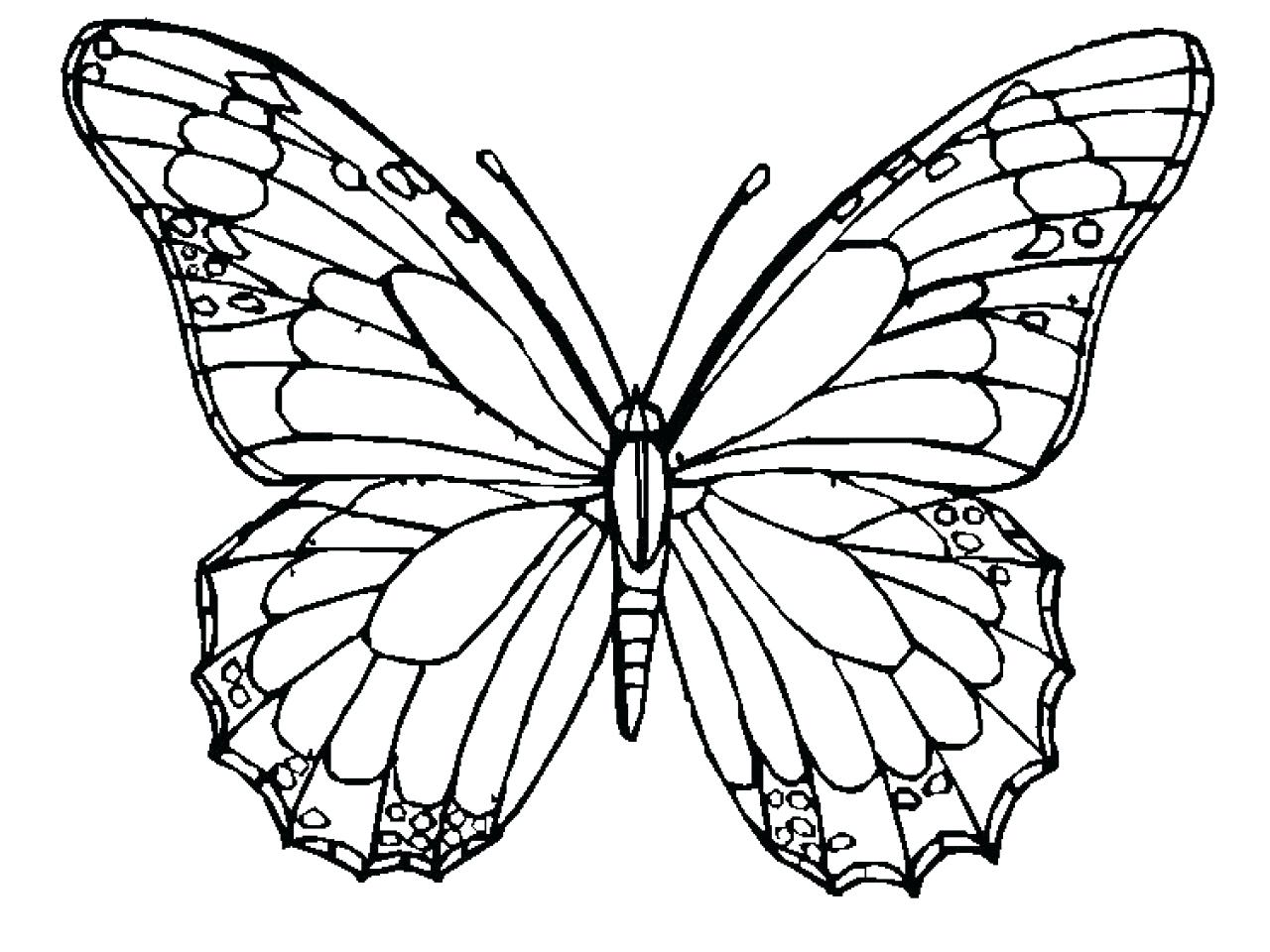 1280x960 Coloring Butterfly Wings Coloring Pages