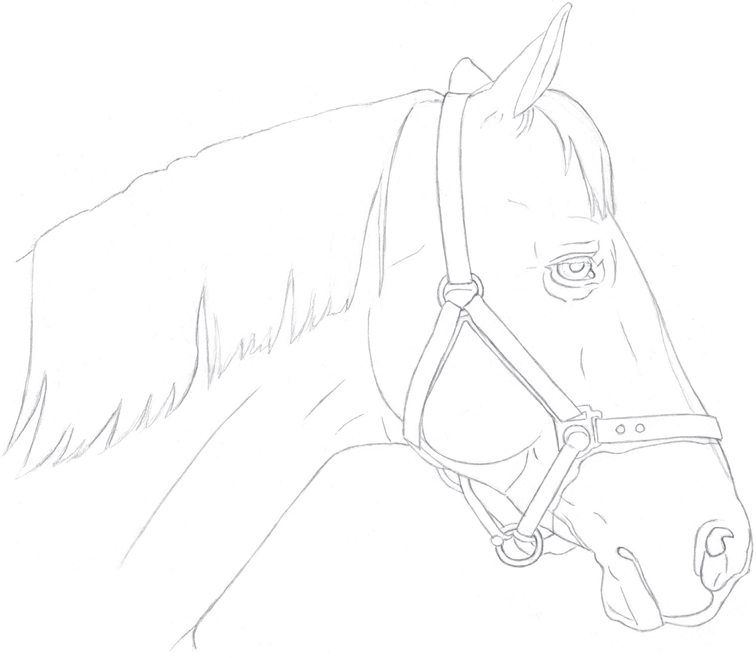 756x658 Horse