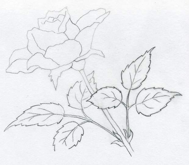 620x540 Pictures Painting Of Rose By Pencil,