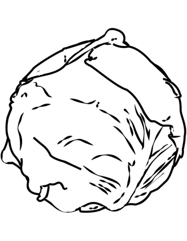 371x480 Cabbage Coloring Page Free Printable Coloring Pages