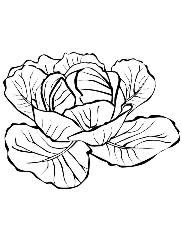 750x1000 Cabbage Coloring Pages. Download And Print Cabbage Coloring Pages