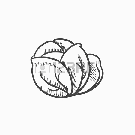 450x450 Cabbage Vector Sketch Icon Isolated On Background. Hand Drawn