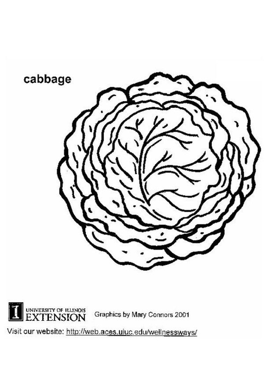 531x750 Coloring Page Cabbage