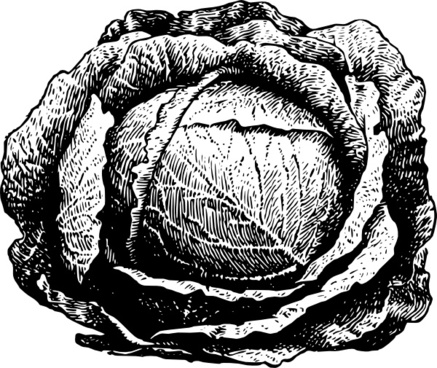 437x368 Vector Cabbage For Free Download About (12) Vector Cabbage. Sort