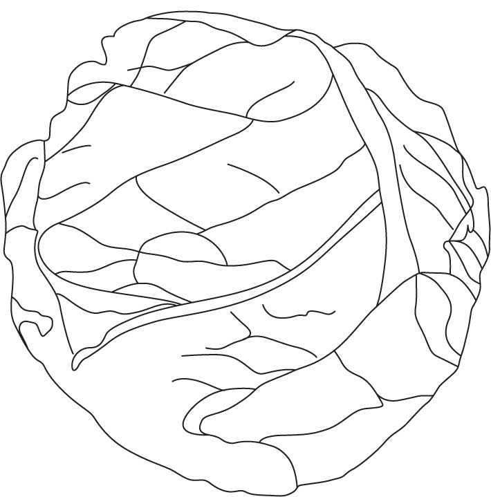 710x719 Cabbage Coloring Pages