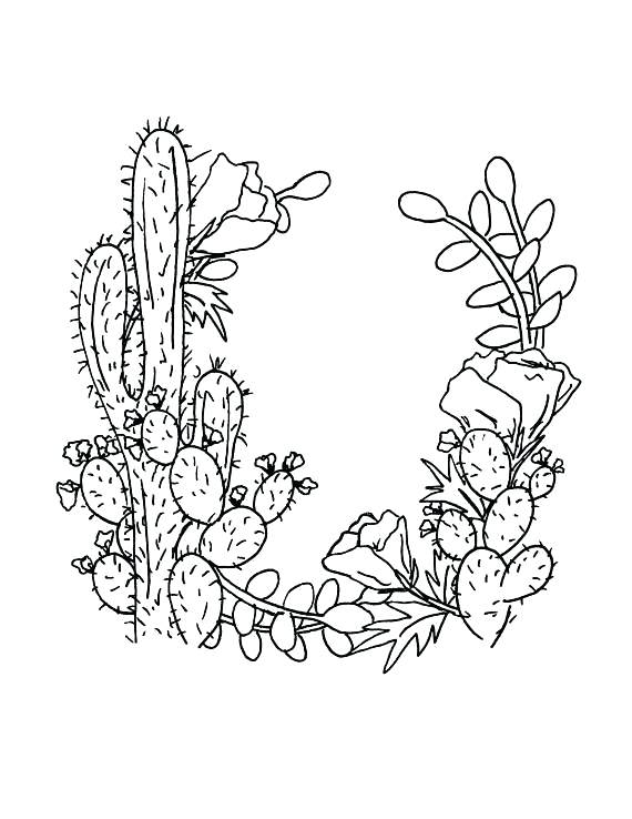 Cactus Drawing At Getdrawings Com Free For Personal Use Cactus