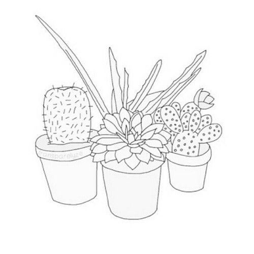 500x500 Cactus Outline Source Google Emily Outlines