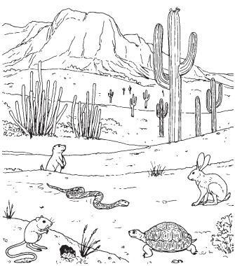 335x380 Drawn Cactus