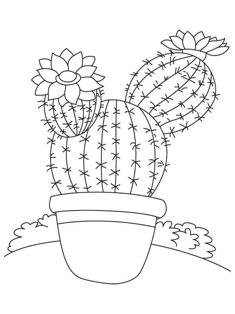 Cactus Flower Drawing at GetDrawings Free for