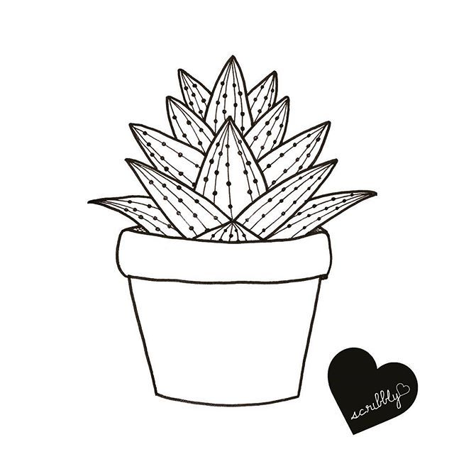 Cactus Plant Drawing