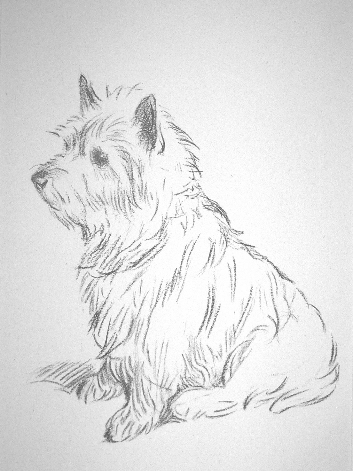 1125x1500 Cairn Terrier Vintage Mounted 1936