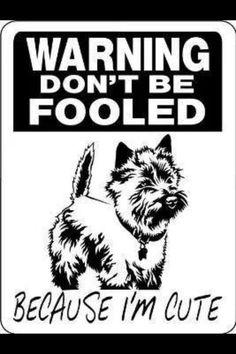 236x354 Omg!!! @jperchinsky Cairn Terrier 1940s Dog Print Puppy Print Art