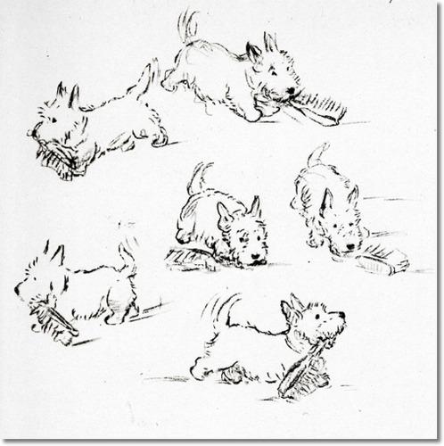 498x500 Scottish Terrier By Lucy Dawson By Lucy Dawson Scottie Dog