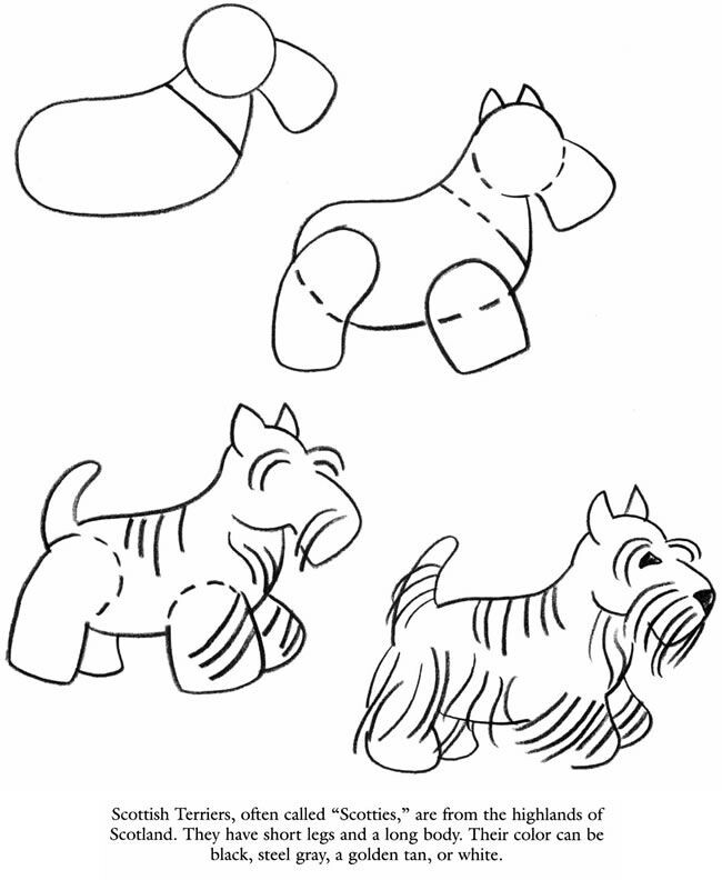 650x792 Scottish Terrier How To Draw Canines Scottish