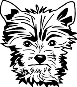 250x283 Yorkshire Terrier Decal