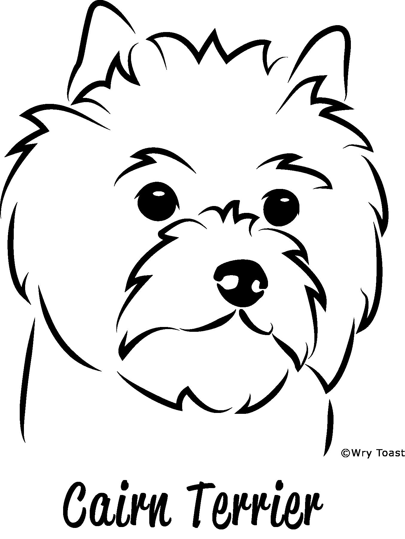 1354x1800 Cairn Terrier Drawings