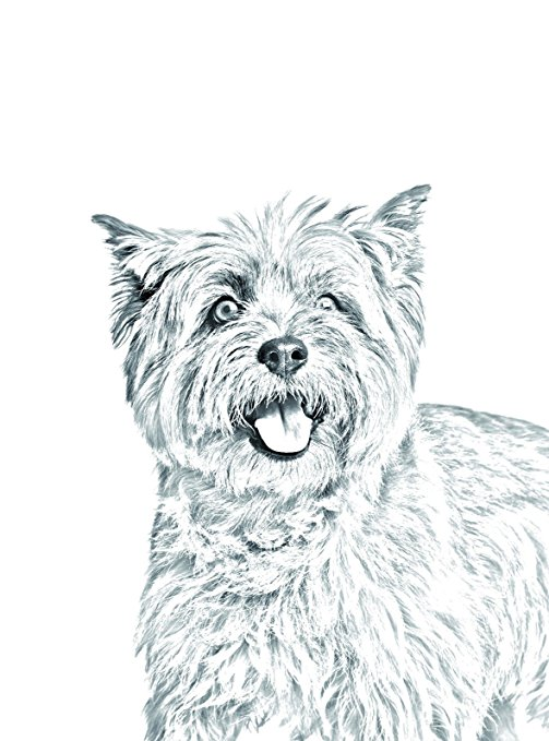503x679 Cairn Terrier, Oval Gravestone From Ceramic Tile With An Image
