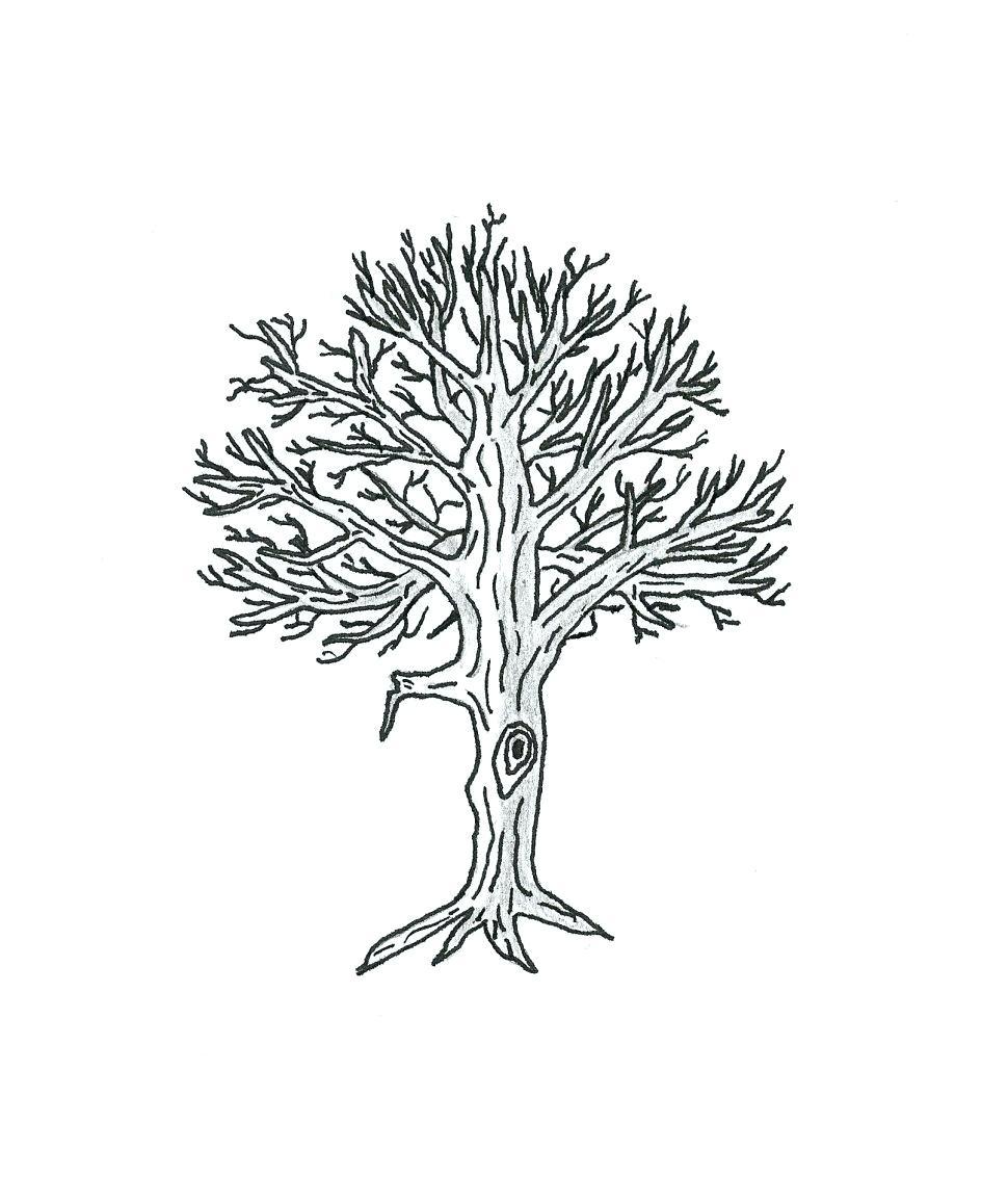 970x1155 Diagram Tree Diagram Probability Calculator Diagrams A Lisp