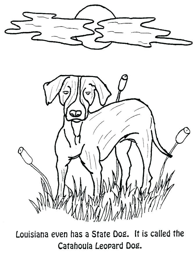 675x874 California State Flag Coloring Page State Flag Coloring Page State