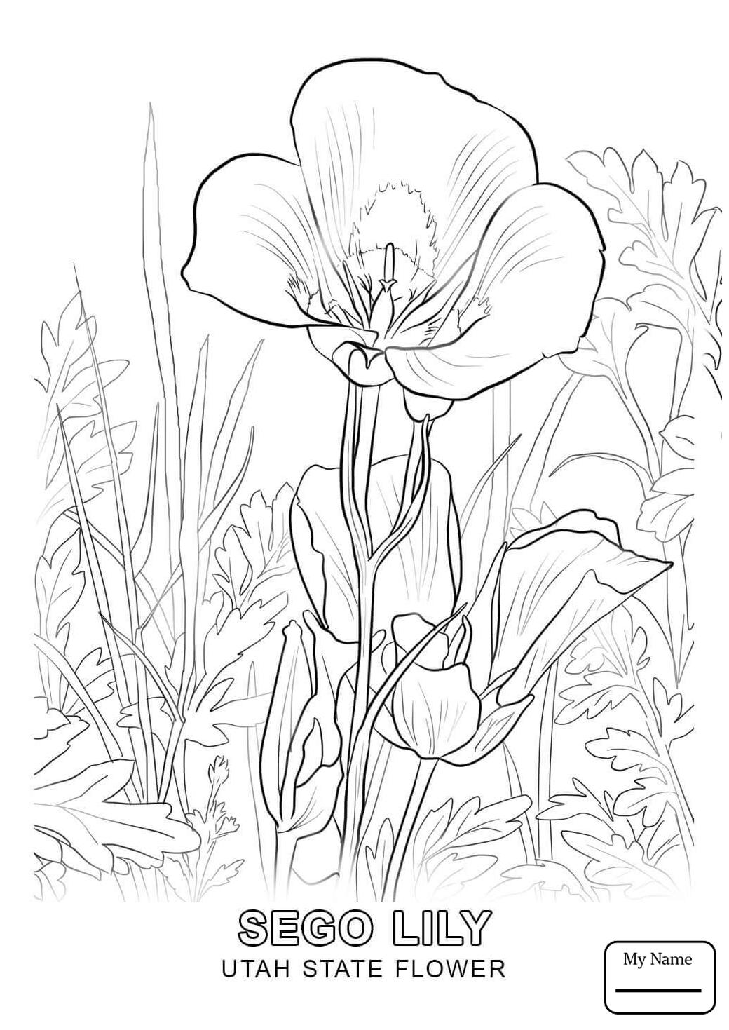 1040x1469 California Gull And Sego Lily Utah State Bird And Flower Utah
