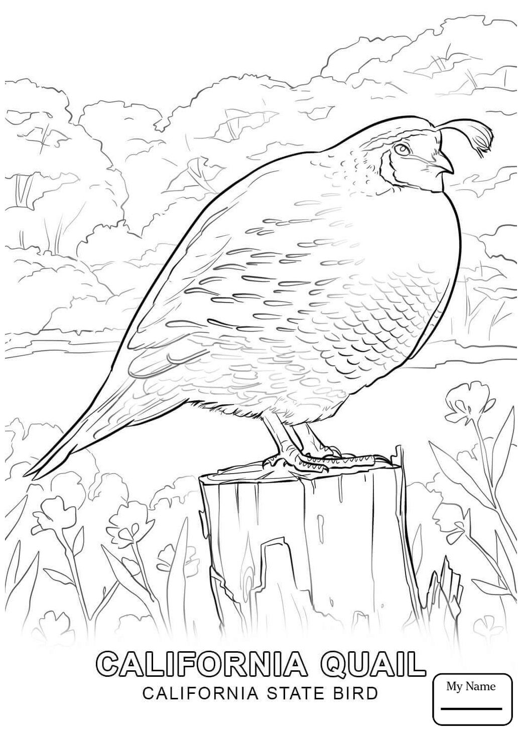 1040x1469 California Countries Cultures California Flag Coloring Pages