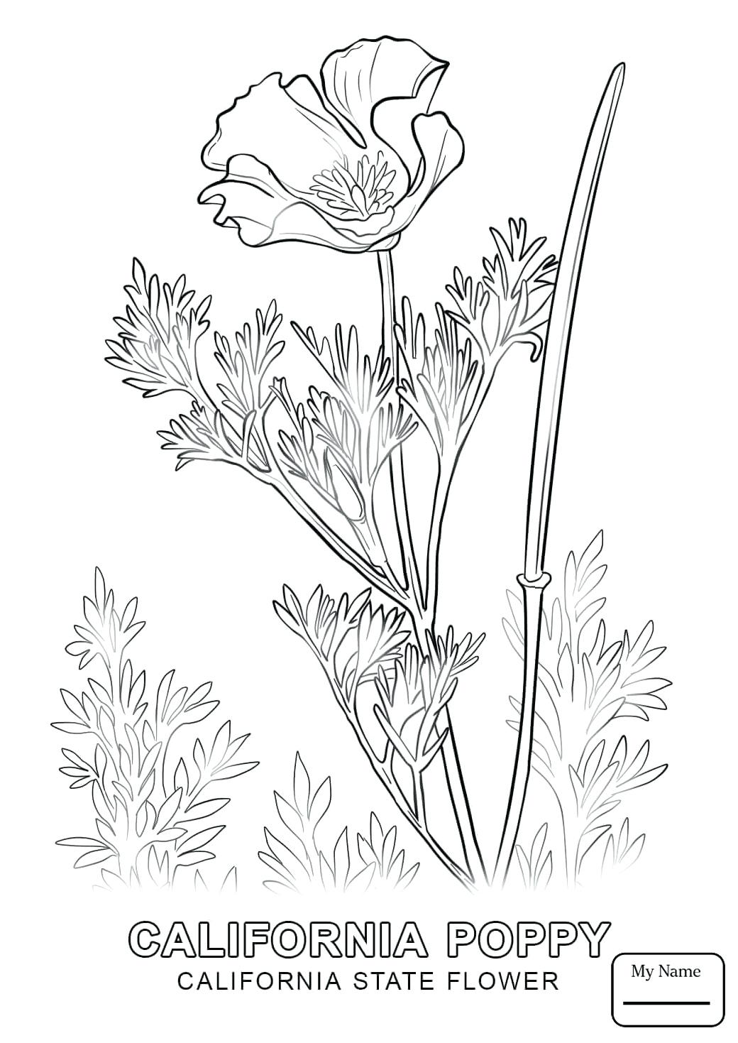 1040x1469 Coloring California State Flag Coloring Page Countries Cultures