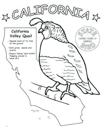 329x412 California Coloring Pages State Flag Coloring Pages California Map