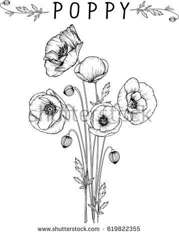 357x470 Drawn Poppy