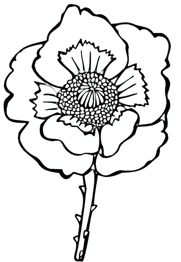 620x900 Poppy Coloring Page Sheets Printable California Golden