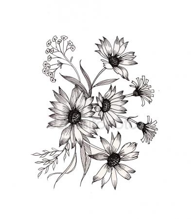 393x450 California Poppy Flowers Drawing Sketch Line Art White Backgrounds