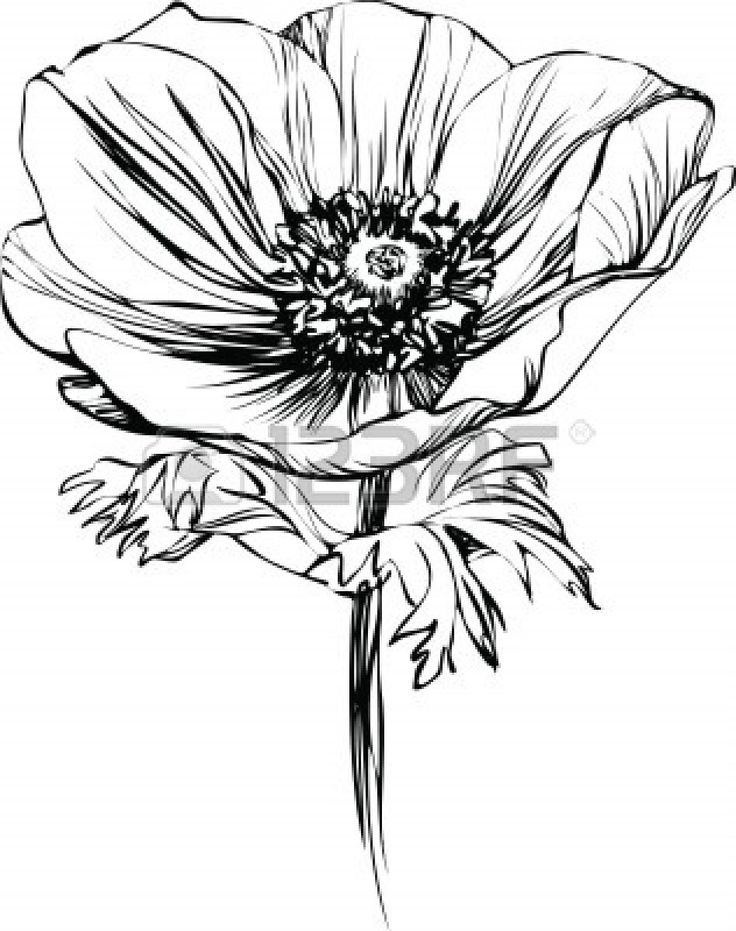 California Poppy Drawing At Getdrawings Free For Personal Use