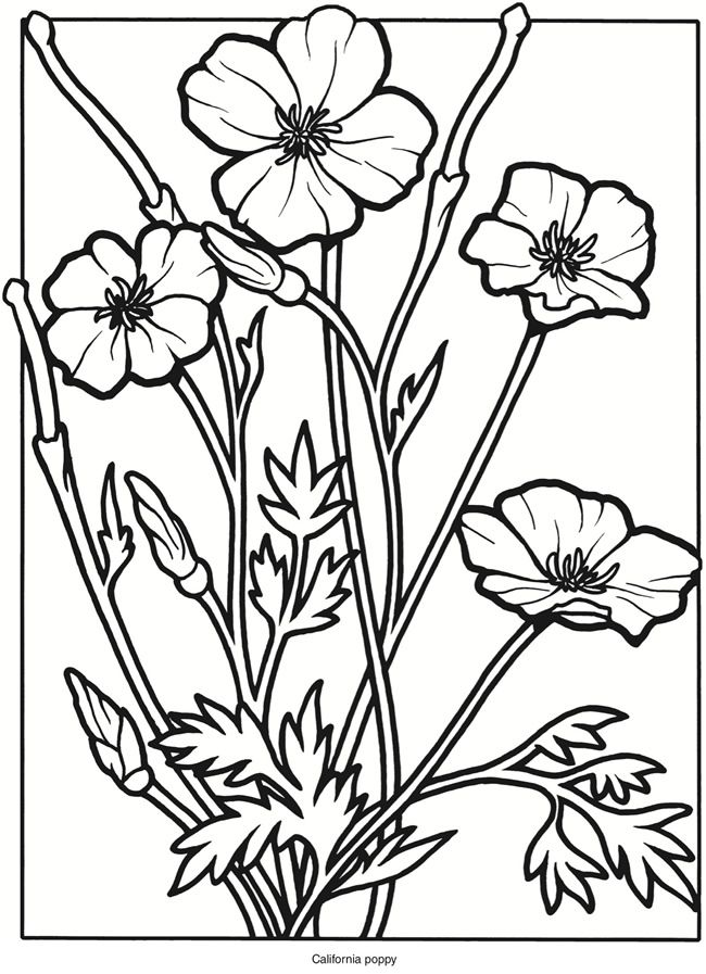650x897 Drawing Of California Poppy Coloring Page Kids Play Color. Purple