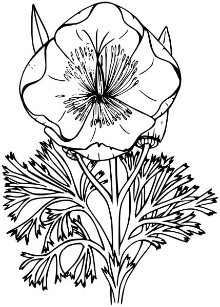 429x600 California Poppy Lineart